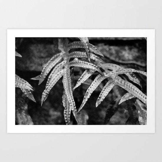Silvery Foliage Art Print