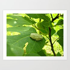 A frog in the fig tree Art Print