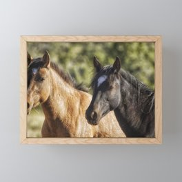 A Filly and a Colt from Garcia's band - Pryor Mustangs Framed Mini Art Print