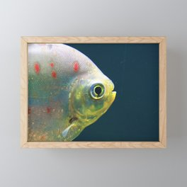 One Fish Framed Mini Art Print