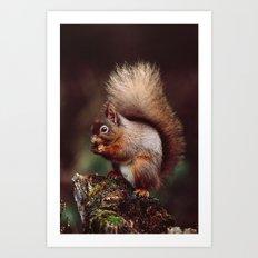 RED SQUIRREL. Art Print