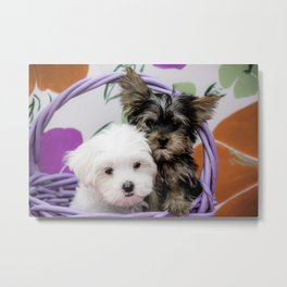 Maltese Puppy and a Yorkshire Terrier Puppy Cuddling in a Purple Basket with Flower Background Metal Print
