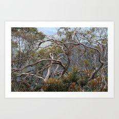 Australiana No. 1 Art Print