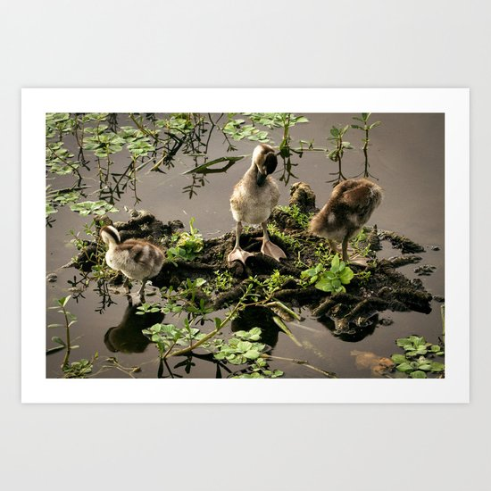 Ducklings Art Print