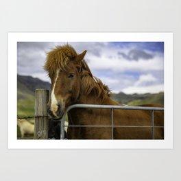 Horse in Iceland Art Print