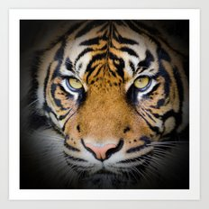 Tiger in the shadow Art Print