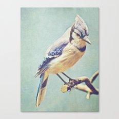 Virginia Bluejay Canvas Print