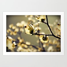 Magical Dogwood Art Print