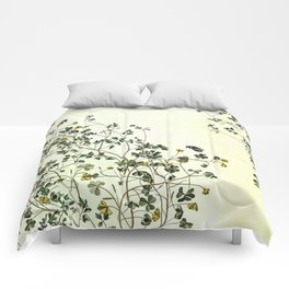 The cultivation of wild Comforters