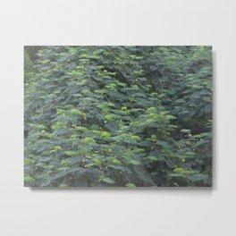 Presidio, SF Foliage Metal Print