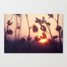 Garden Sunset Canvas Print