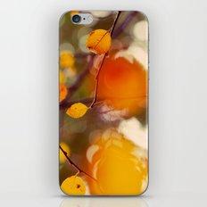 Nutmeg iPhone & iPod Skin