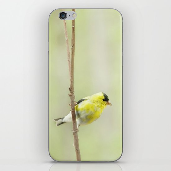 Little Mellow Yellow iPhone & iPod Skin