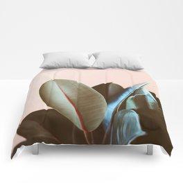 Ficus Elastica #1 Comforters