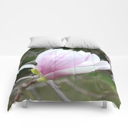 Soft Magnolia Days Comforters