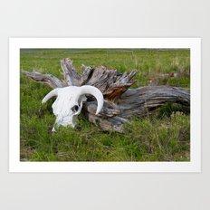 Buffalo skull Art Print