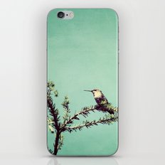 Hummingbird at rest iPhone & iPod Skin