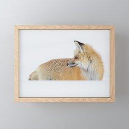 Red Fox Looking Off Framed Mini Art Print