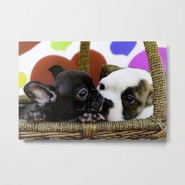 English Bulldog Puppy Kissing a French Bulldog Puppy Metal Print