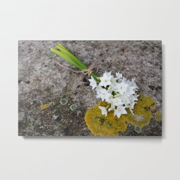 Bunch of narcissi Metal Print