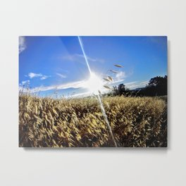 From the Perspective of a Blade of Grass Metal Print