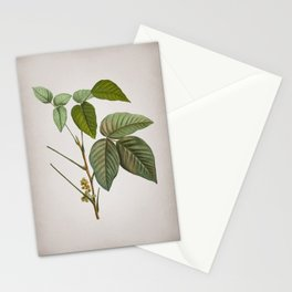 Vintage Eastern Poison Ivy Botanical on Parchment Stationery Cards