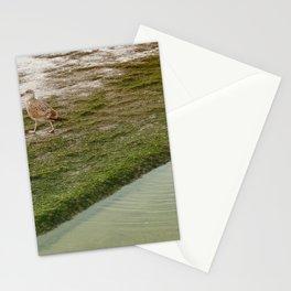 Seagull, bird, animal Stationery Cards