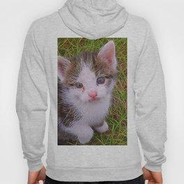 Extraordinary animals-Kitten Hoody