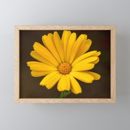 Another yellow marigold Framed Mini Art Print