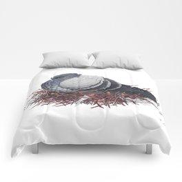 Rock Pigeon Comforters