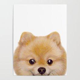 Pomeranian Dog illustration original painting print Poster