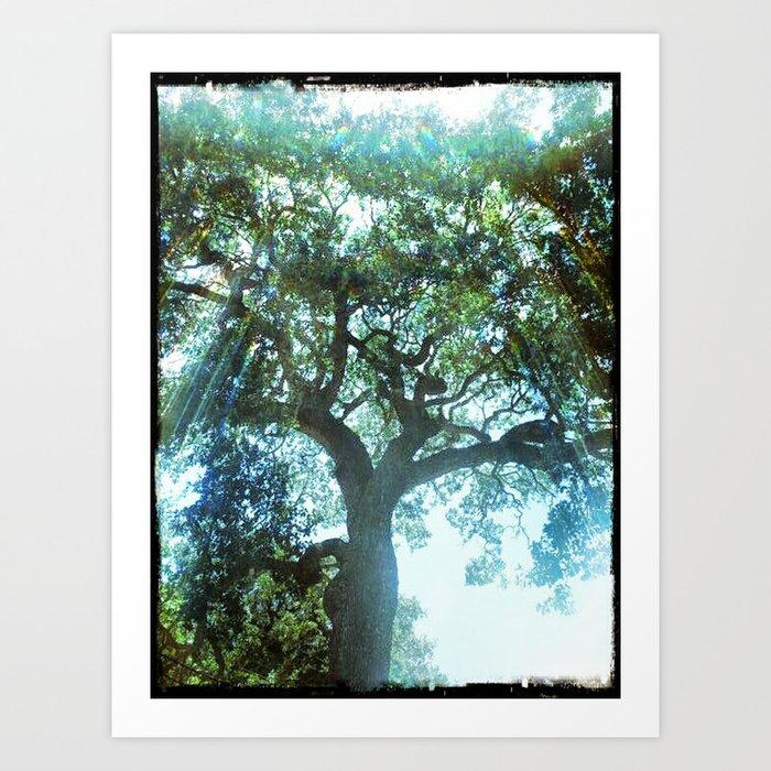 Ramona Oak Tree Art Print