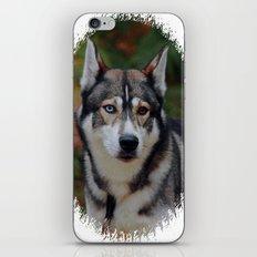 Husky 3 iPhone & iPod Skin