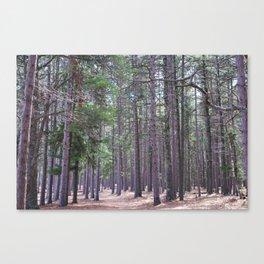 Hidden Trails Canvas Print