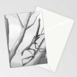 Danuria affinis Habitat Stationery Cards