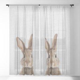 Rabbit - Colorful Sheer Curtain