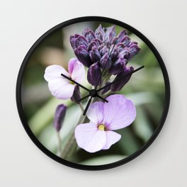 Dame's Rocket Blooming Buds Wall Clock
