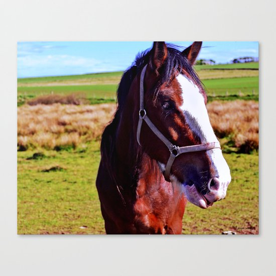 Scottish Clydesdale Canvas Print