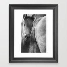 Horse foal Black & White, fine art, print, still life, high quality photo, animal photography Framed Art Print