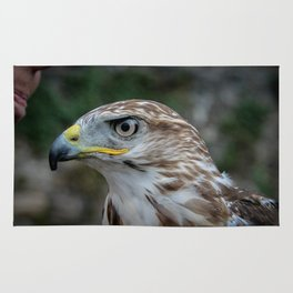 Golden Eagle 2 Rug