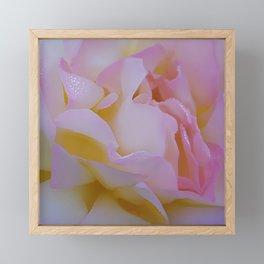 Pink rose petals kissed by raindrops Framed Mini Art Print