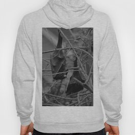 Dark Bat Laughs Hoody