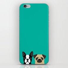 B Terrier & Pug iPhone & iPod Skin