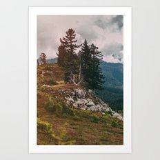 Northwest Forest Art Print