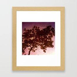 The Window's Tree Framed Art Print