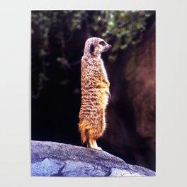 What's Up Meerkat? Poster