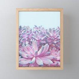 Sweet Succulents Framed Mini Art Print