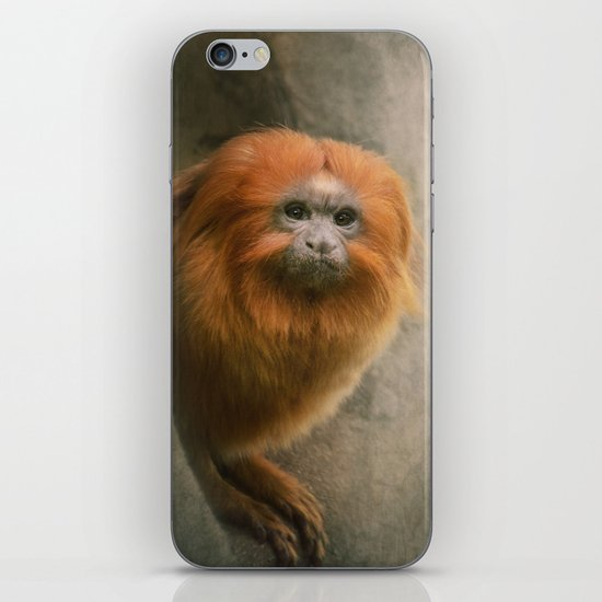 Little Golden Headed Lion Tamarin iPhone & iPod Skin