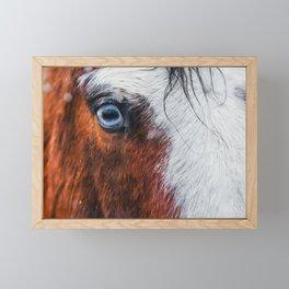 Wild Blue Eyed Horse - Close Up Framed Mini Art Print