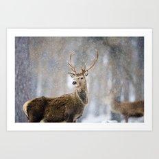 Red Deer in Snowfall Art Print